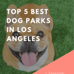 Essential Products for Every Dog Owner, a blog post by Liz in Los Angeles, an image of a dog
