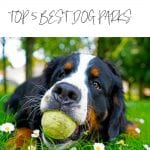 Top 5 Best Dog Parks in Los Angeles + Essential Products for Every Dog Owner, a blog post by Liz in Los Angeles, an image of a dog