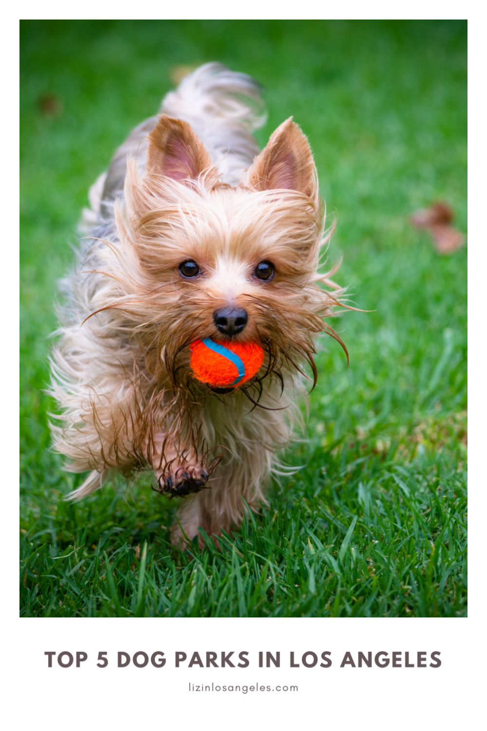 Top 5 Best Dog Parks in Los Angeles, a blog post by Liz in Los Angeles, an image of a dog