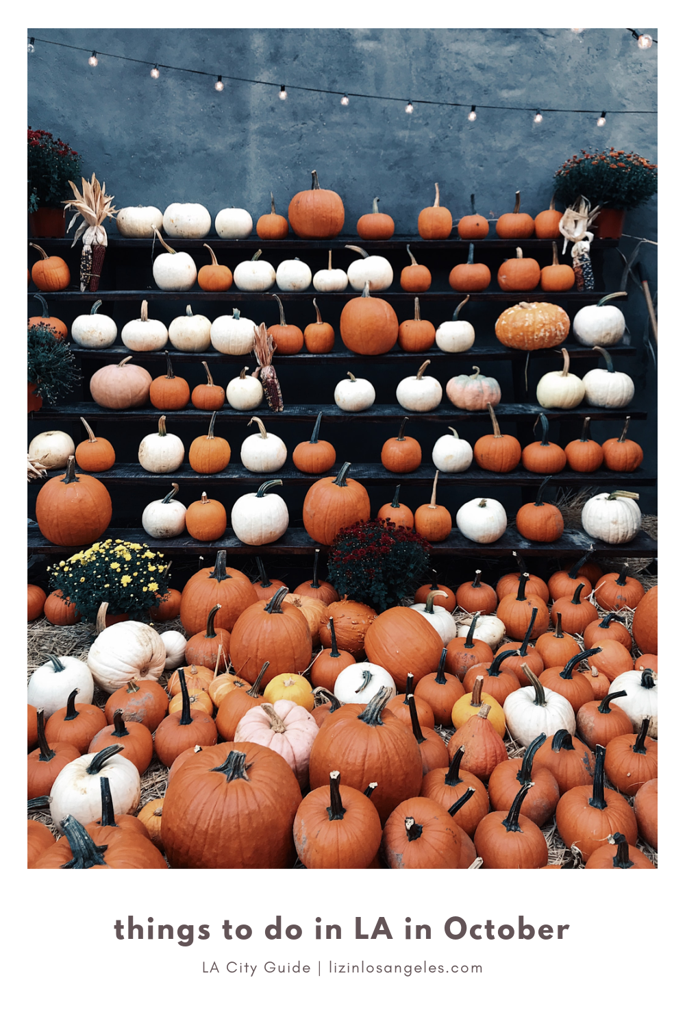 Top 5 Special Things to Do in LA in October When Social Distancing, a blog post by Liz in Los Angeles, Los Angeles Lifestyle Blogger, an image of pumpkins